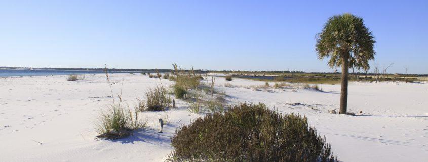 palm eroded, beach erosion