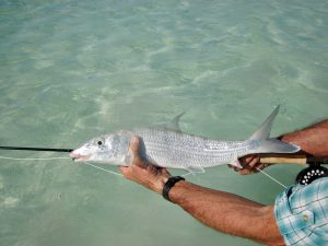 Baz with a nice Bonefish