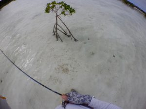 A Mangrove outpost on the flat