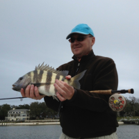 Sheepshead rarely takes a fly