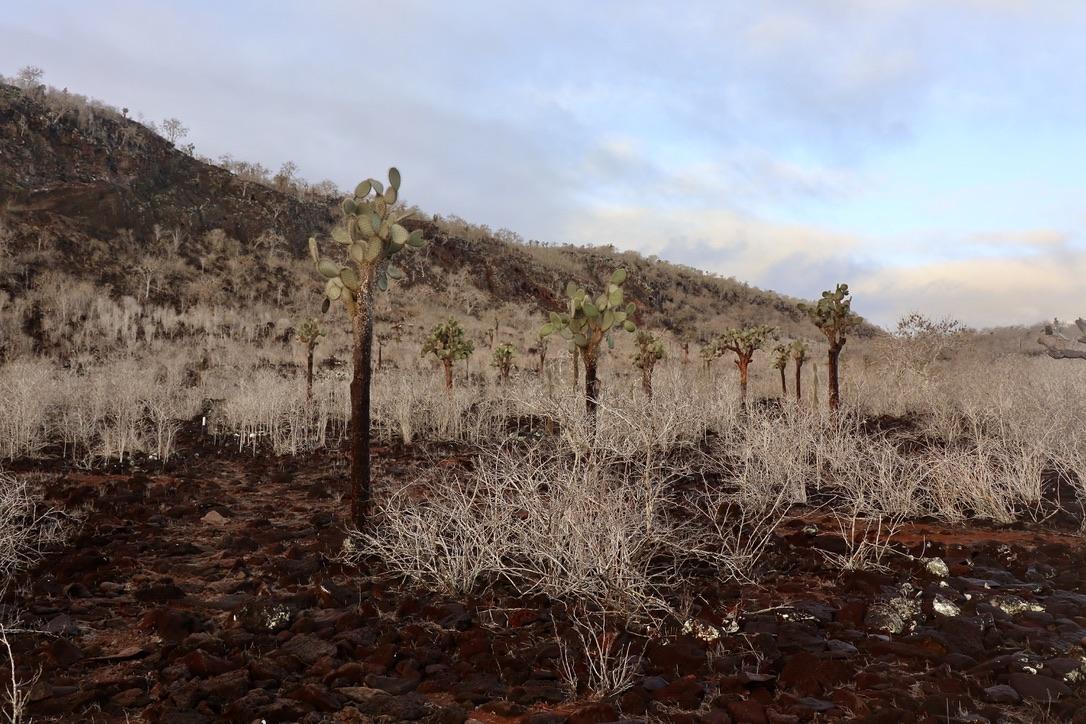 Cactus - Santa Fe